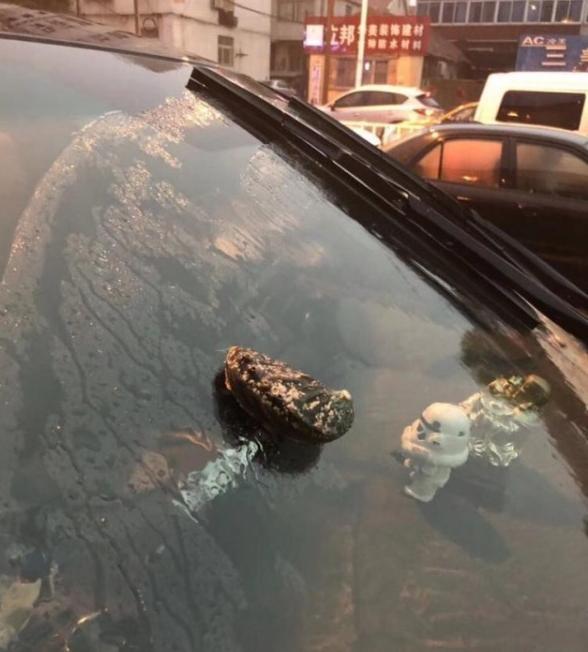 улитки сыпятся с неба в китае
