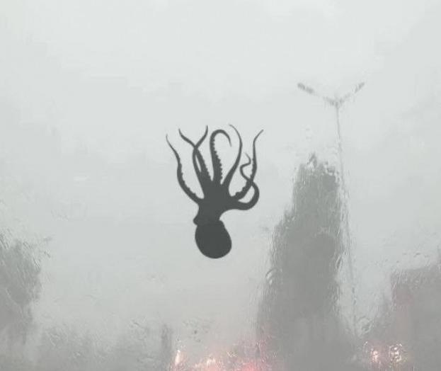 дождь из осьминогов в китае