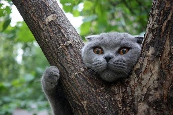 Застрял на дереве, спасая кота