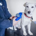 Новое о регистрации домашних животных и содержании дома «опасных» животных