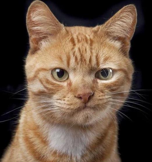 Кот сдал хозяина-должника по алиментам
