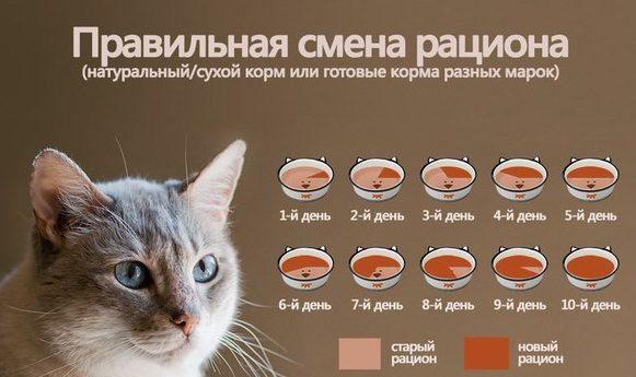 Как правильно кормить кошек сухим кормом