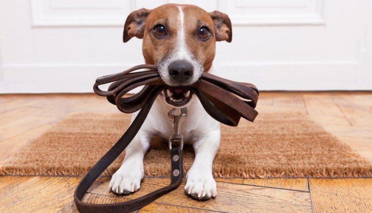 новые правила выгула собак в магадане