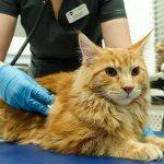 Диспансеризация собак и кошек: методы и сроки проведения