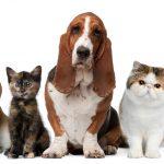 Число домашних животных в России выросло на 14% за 3 года — данные Интерфакс
