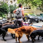 Колымские власти рассматривают новые правила содержания и выгула домашних животных