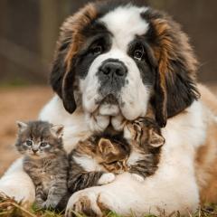защитить своих животных