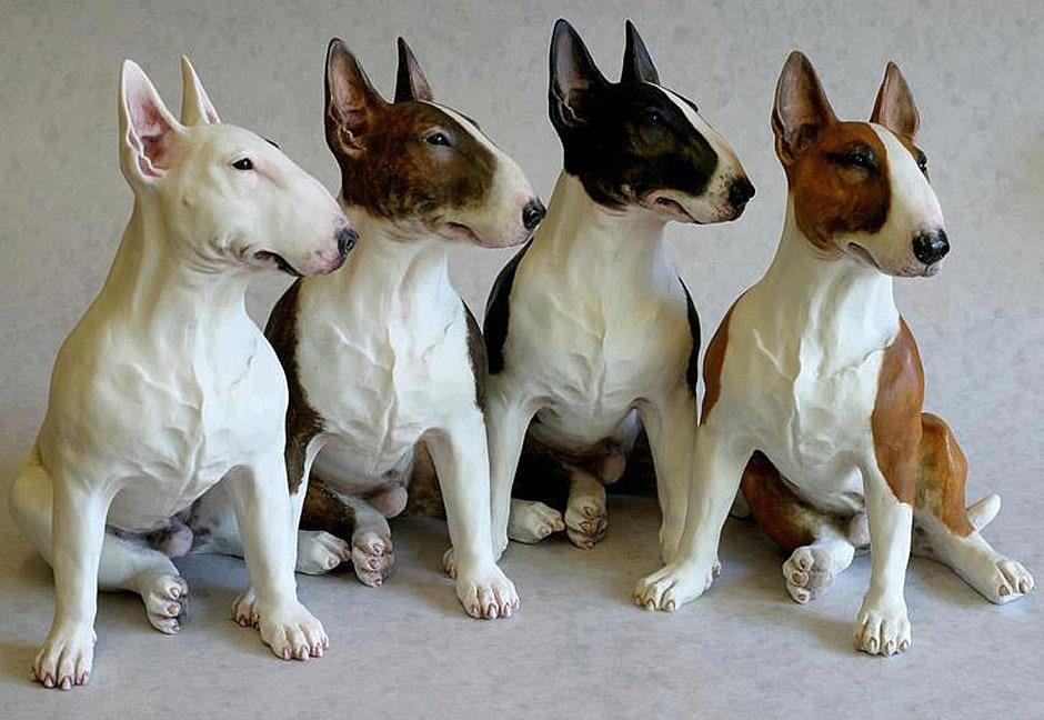 бультерьер щенки-подростки