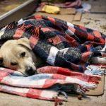 Новое законодательство о защите животных