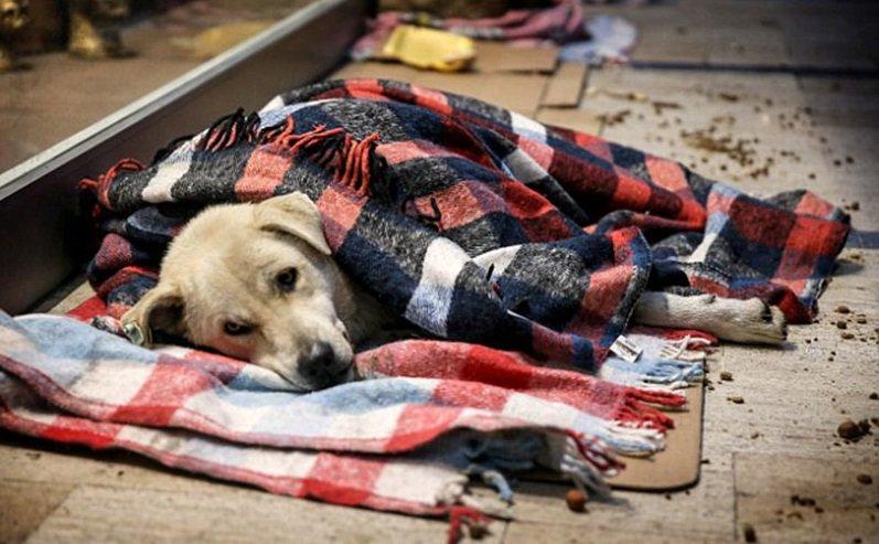Принят закон о защите животных в России (2018 год)