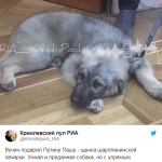 Путину подарили собаку. Снова