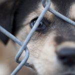 Владелец концлагеря для собак из Нижнего Новгорода останется без наказания