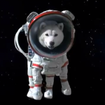 Космическими туристами могут стать домашние любимцы