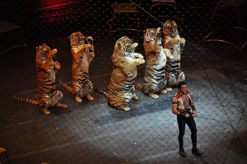 Португалия: диких животных больше нельзя показывать в цирке