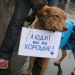 Ярославль: проблемы бездомных животных начнут решаться