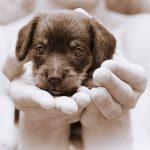 Заработок на домашних животных без негуманного отношения — новая инициатива минприроды