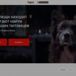 Яндекс и Purina помогут найти пропавших животных и их хозяев