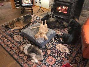 собаки у камина в новой квартире