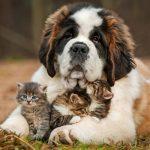 Ветеринарные услуги в Москве: с заботой о вашем любимце!