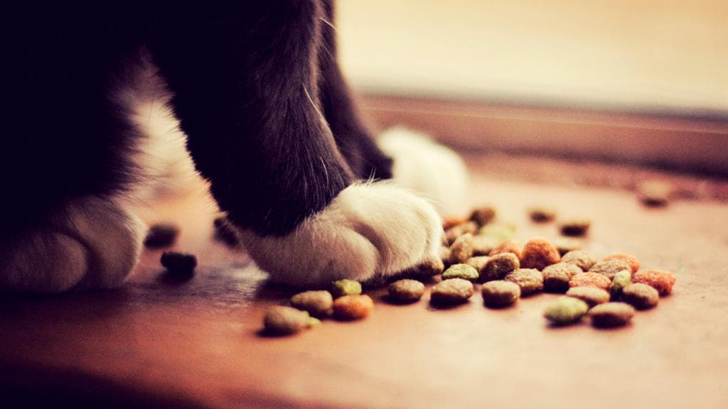 лаки кошки на корме