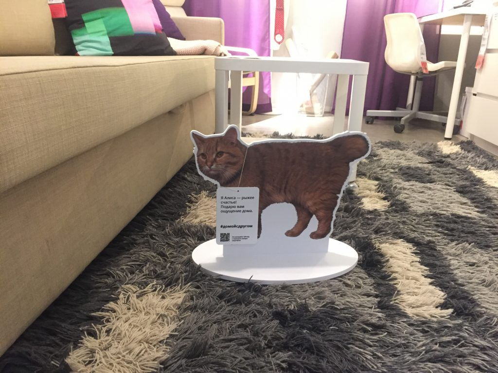 В IKEA теперь можно найти домашнего питомца