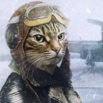 Россияне озаботились правилами перевозки животных на самолете