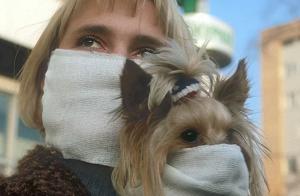 собака в марлевой повязке