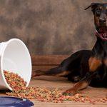 Лучшие сухие корма для собак: как выбрать