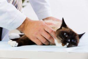котик лечится фото