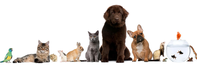 Породы собак: все собаки от А до Я - список по алфавиту