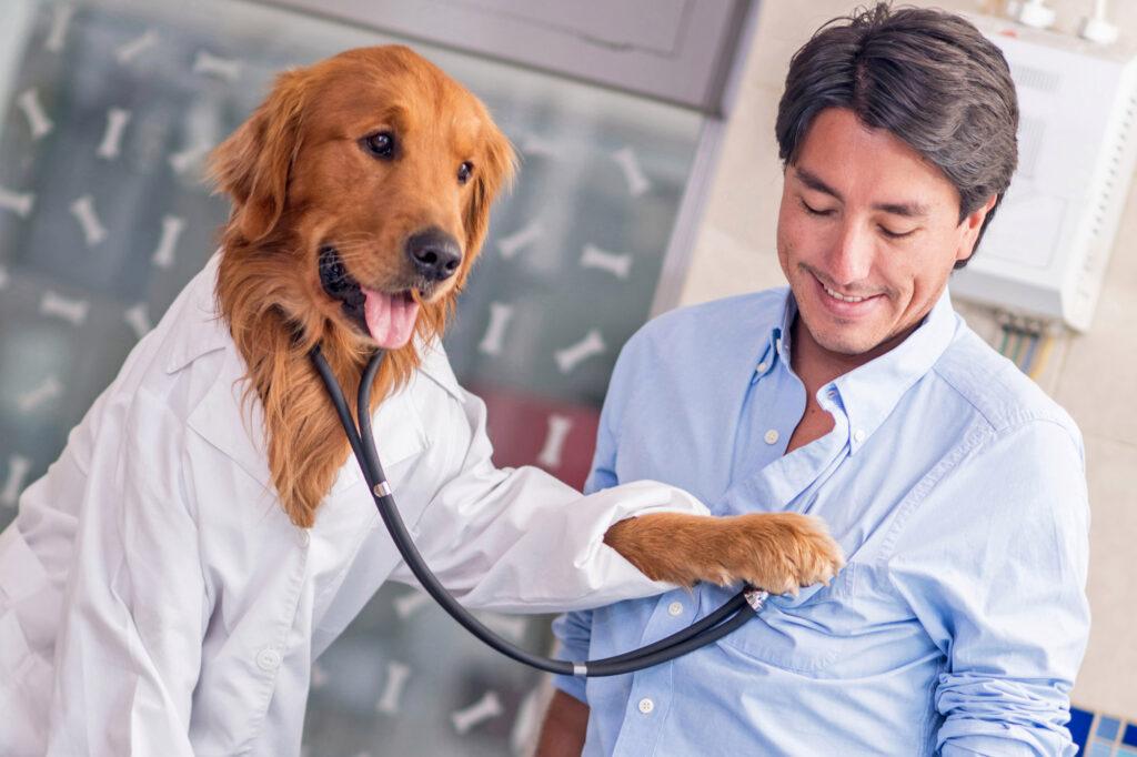 собака врач