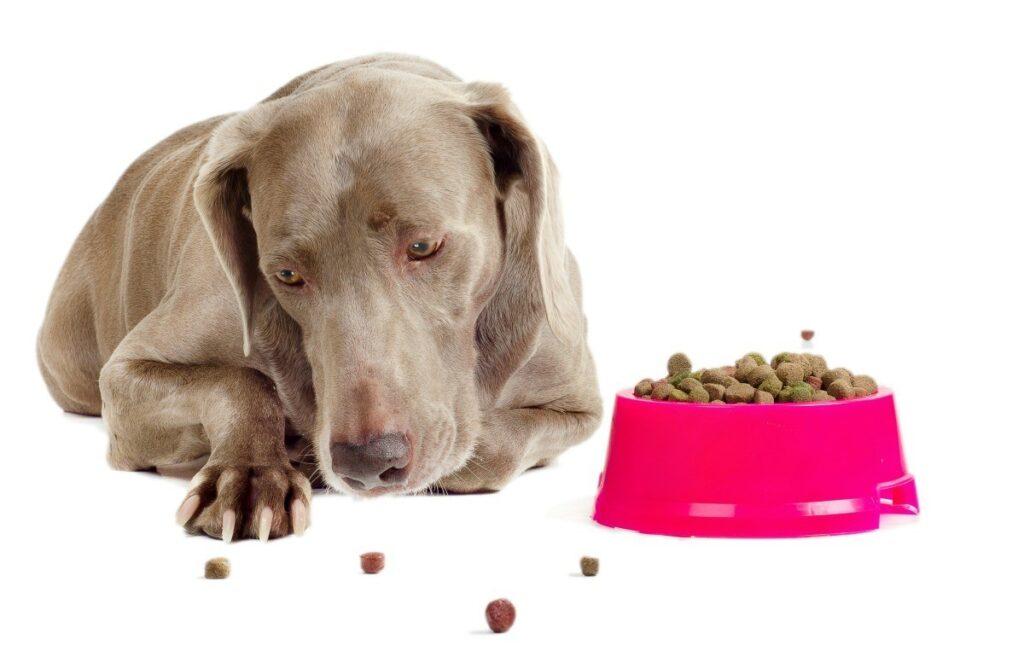 потеря аппетита у собак