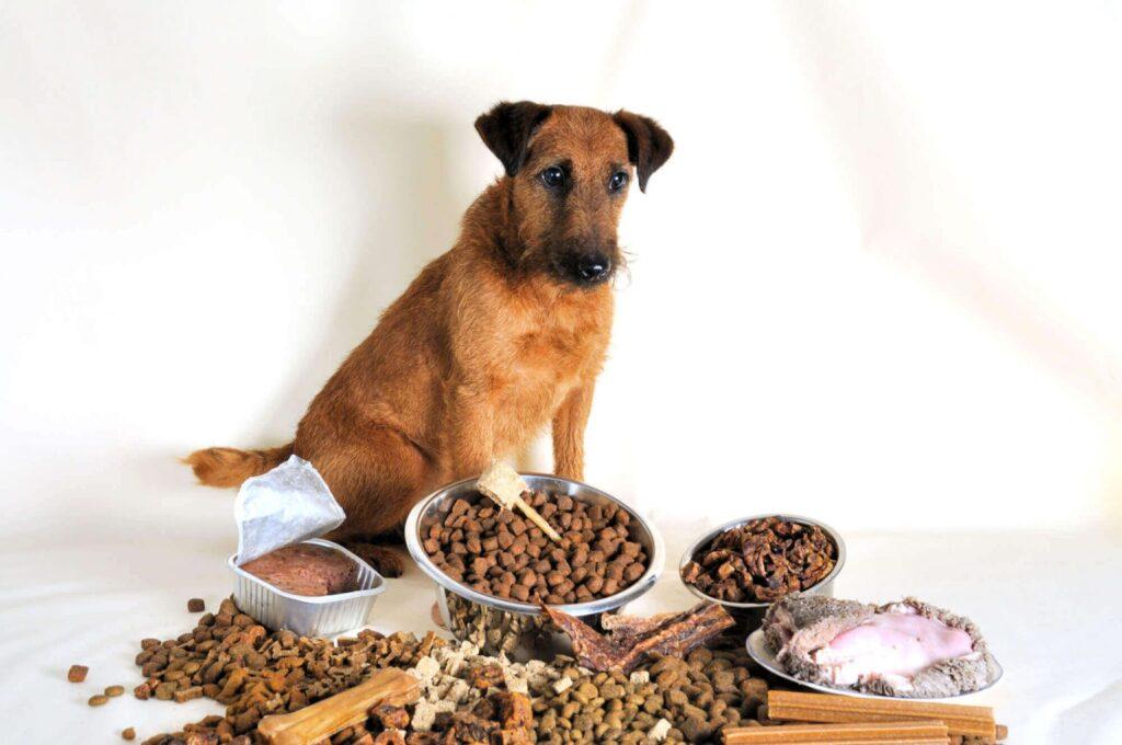 сухой или влажный корм для собак выбрать