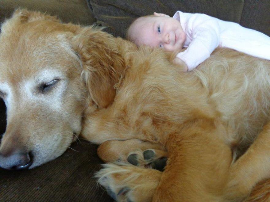 счастливый малыш на собаке
